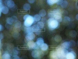 森林の玉ボケの写真・画像素材[4908369]