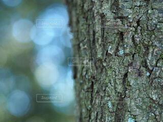 木の一部の写真・画像素材[4908370]