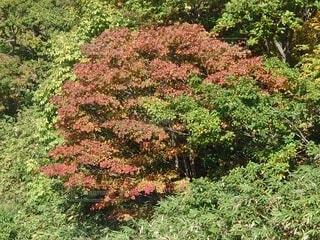 初秋の写真・画像素材[4888508]