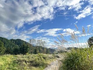 秋のススキと青い空の写真・画像素材[4875776]