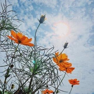 季節の花の写真・画像素材[4876198]