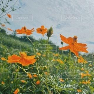 秋の装いの写真・画像素材[4876245]