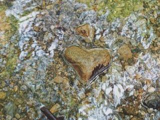 川に浮かぶハートの石の写真・画像素材[4877567]