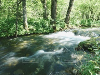 森林を流れる梓川の写真・画像素材[4878817]