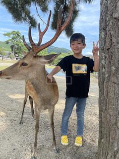 鹿と少年の写真・画像素材[4876534]