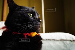 猫 - No.221125