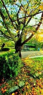 木々の枯葉の写真・画像素材[4940121]