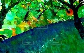 小川に緑や幹の写真・画像素材[4944256]