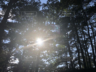 光の天使  いいことありそうの写真・画像素材[4887490]