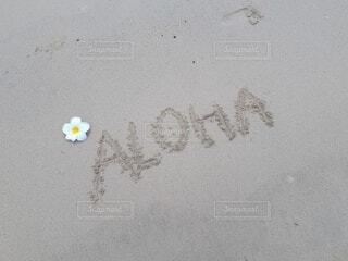 海の写真・画像素材[4886260]