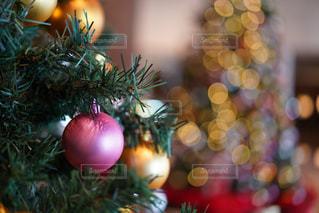 クリスマスツリーの写真・画像素材[1684095]