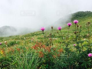 自然の写真・画像素材[221701]