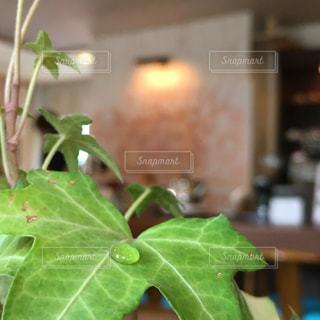 カフェの写真・画像素材[226266]