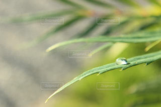 自然の写真・画像素材[239641]