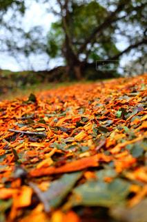 秋の写真・画像素材[226406]