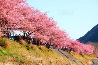 春 - No.226597