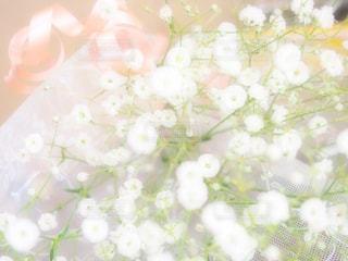 自然の写真・画像素材[226615]