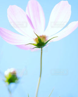 花の写真・画像素材[246975]