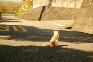 猫の写真・画像素材[246981]