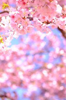 flower - No.382868