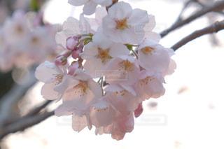 flowerの写真・画像素材[388981]