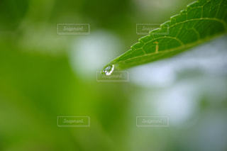 自然の写真・画像素材[479372]