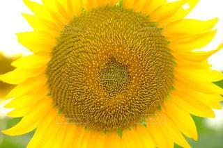 花の写真・画像素材[654555]