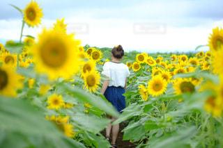花の写真・画像素材[654558]
