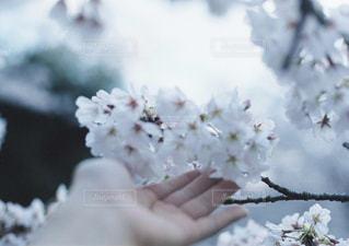 近くに花を持っている手のアップ - No.925240