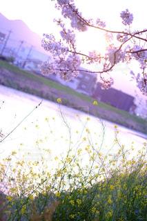 近くの木のアップの写真・画像素材[1032014]