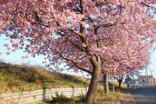 桜 - No.1036729