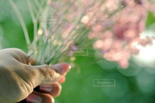 flowerの写真・画像素材[1510343]
