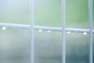 雨上がりの写真・画像素材[1510345]