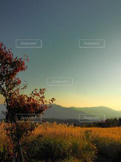 自然の写真・画像素材[222900]