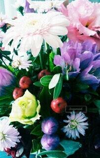 いろんな花の写真・画像素材[4904462]