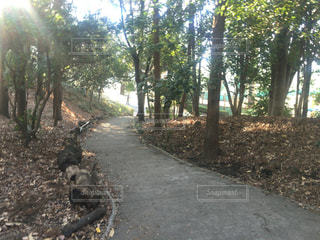 公園の散歩道 - No.358563