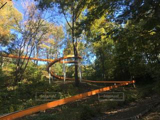 森の中のローラー滑り台の写真・画像素材[856720]