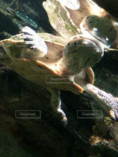 水族館の写真・画像素材[224290]