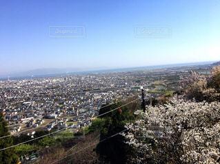 桜 - No.504243