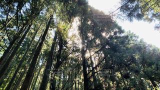 森林浴の写真・画像素材[4913498]