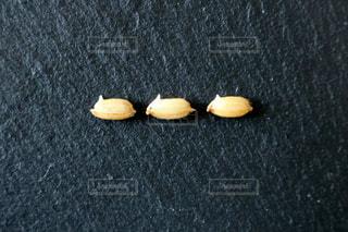 お米の発芽の写真・画像素材[430922]