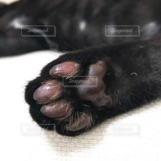 子猫の写真・画像素材[676564]