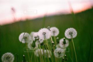 花の写真・画像素材[500681]
