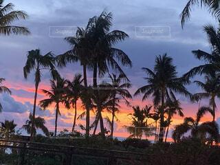グアムの美しい夕焼けの写真・画像素材[4919134]