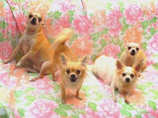 犬の写真・画像素材[305480]