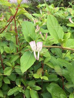 花の写真・画像素材[593745]