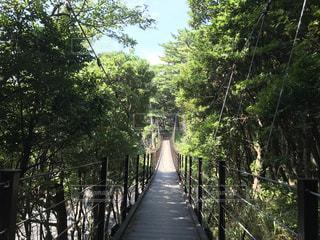 橋の写真・画像素材[832879]