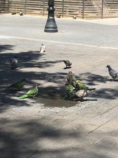 駐車場の上に座っている鳥の群れの写真・画像素材[1715070]