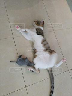 子ネコとねずみの写真・画像素材[1715075]
