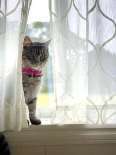 猫の写真の写真・画像素材[4925451]